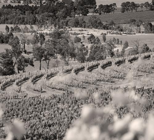 best wineries yarra valley