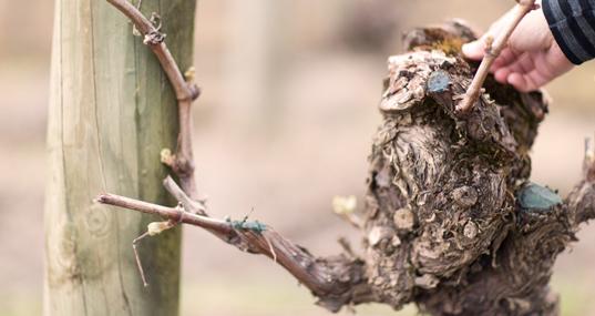 yarra valley best wineries viticulture