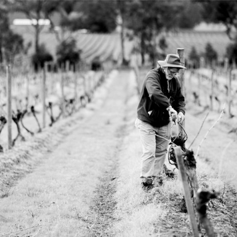 yarra-yering-winemaking-and-viticulture-02