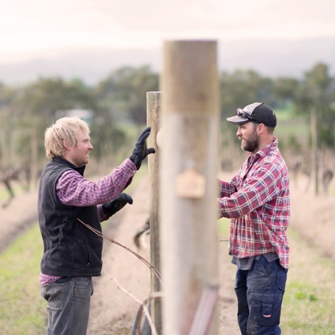yarra-yering-winemaking-and-viticulture-08