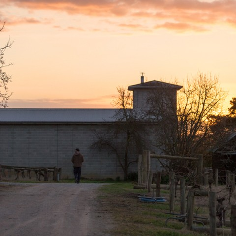 yarra-yering-winemaking-and-viticulture-09