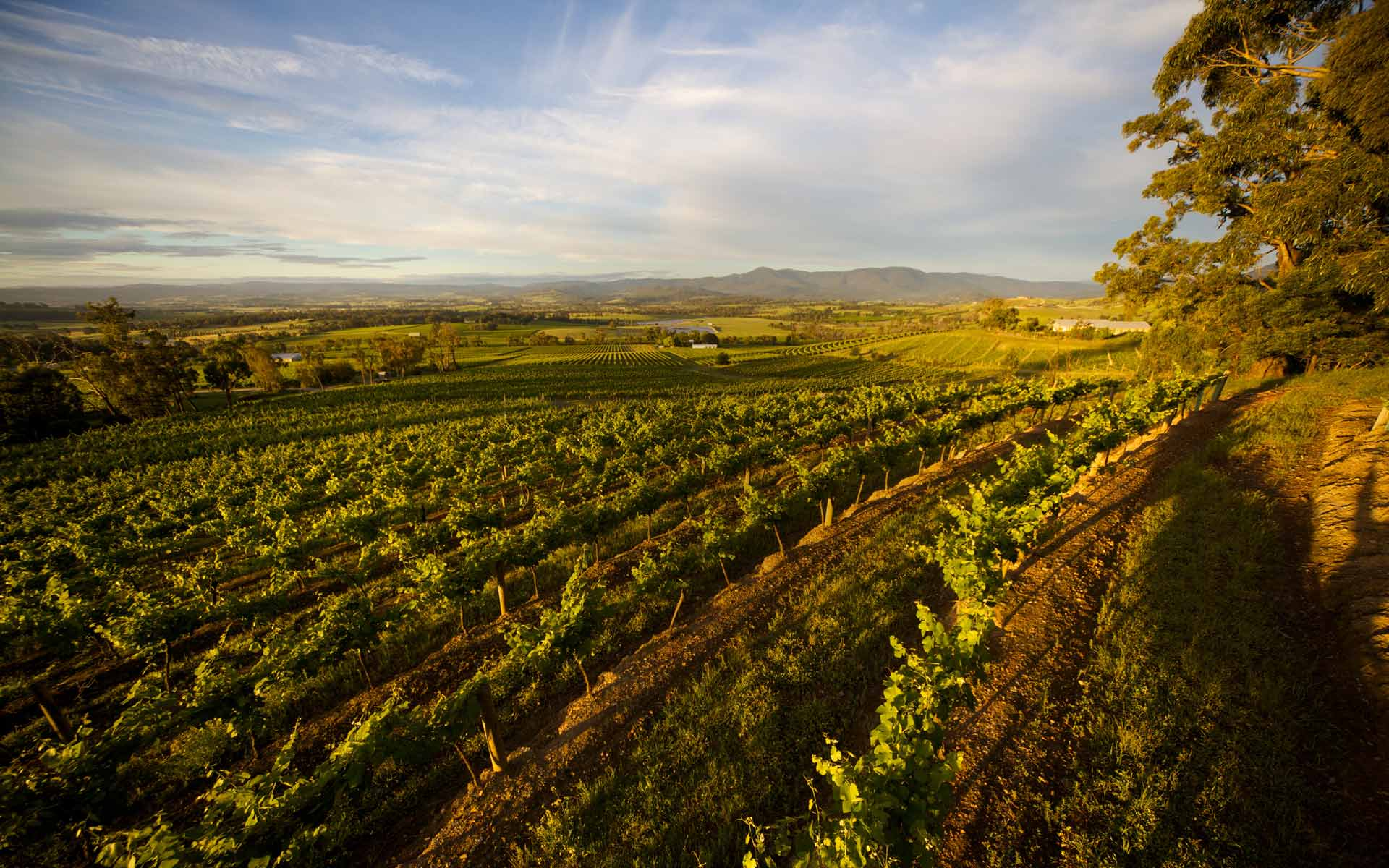 best wineries in yarra valley, yarra yering